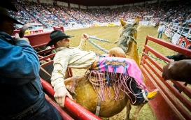 Saddle bronc rider Jesse Kruse of Great Falls, Montana takes a turn on Moon Feathers during the Professional Rodeo Cowboys Association Championship Rodeo at the Pershing Center. KRISTIN STREFF/Lincoln Journal Star