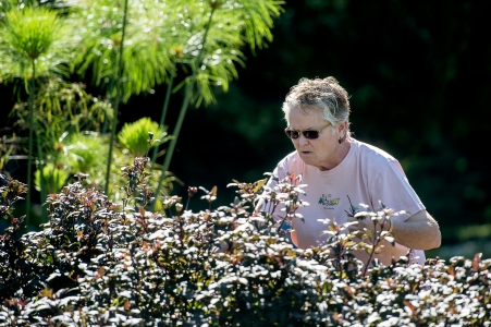 """LINCOLN, NEB - 09/27/2016 - Master gardener and volunteer Cheryl Rourke whistles as she clips dead heads from plants during Garden Gab on Tuesday, Sept. 27, 2016, at the Sunken Gardens. Sponsored by Lincoln Parks and Recreation, Garden Gab invites master gardeners and other volunteers to """"learn and do"""" by helping maintain the gardens every Tuesday and Thursday morning from 9 A.M. to noon May through October. KRISTIN STREFF, Journal Star"""